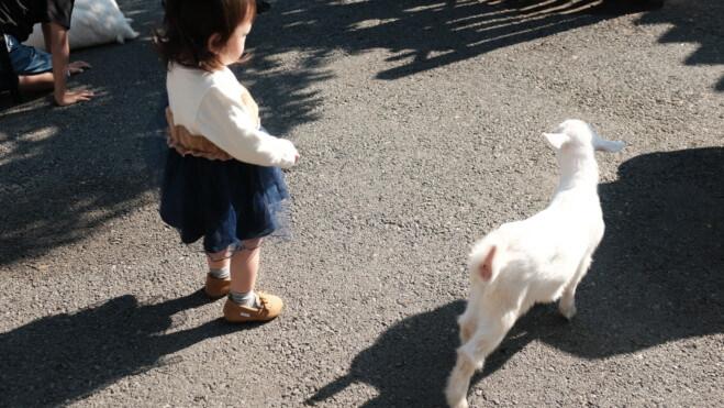 子ヤギと娘
