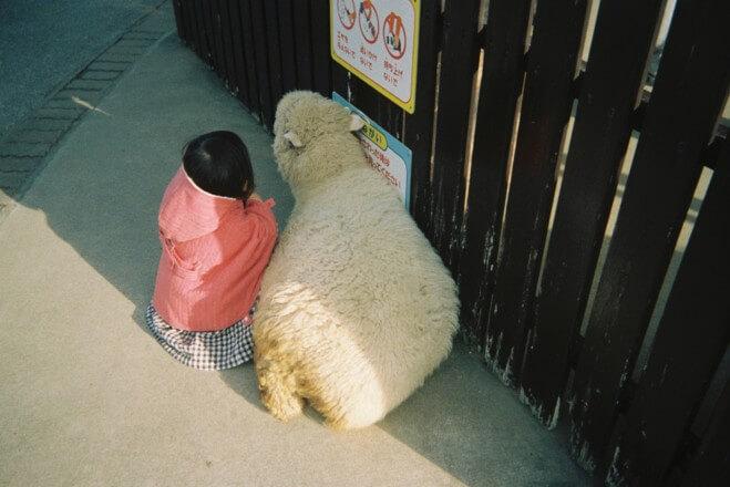 羊に寄り添う娘