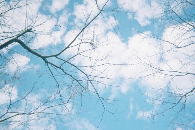 青い空と枝