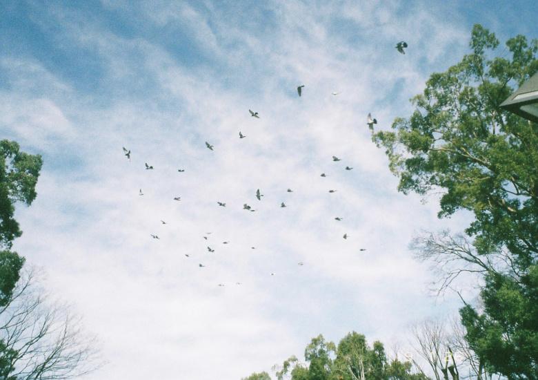 鳥が羽ばたく